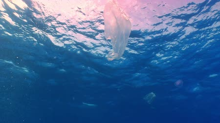 lixo : Plastic bag floating in ocean, pollution environment