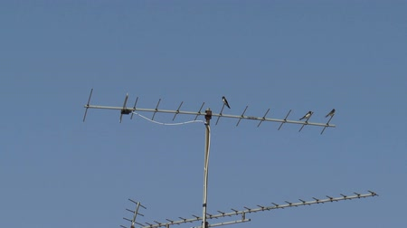 nyel : Swallows sitting on a TV antenna, on blue sky background