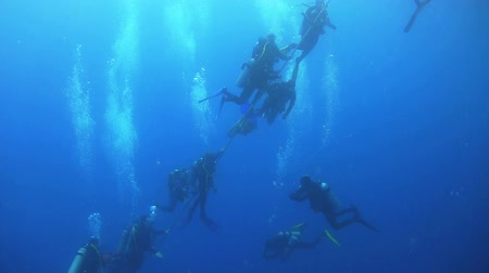 mergulhador : Group of Divers Preparing to Dive, Red sea