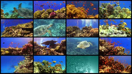 underwater video : Video Wall Tropical Fish on Vibrant Coral Reef, 4K 16 screens static