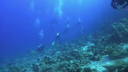 rudé moře : Group of Divers Swims Over Coral Reefs Red Sea