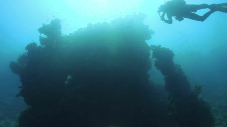 air bubble : Diver Swims over Coral Reefs, underwater scene Stock Footage