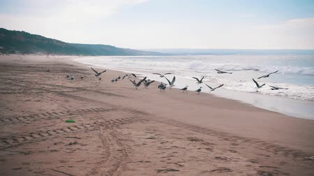 létat : Seagulls Make Takeoff from the Ocean Beach, slow motion