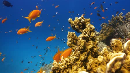 reef life : Tropical Fish on Vibrant Coral Reef, underwater static scene
