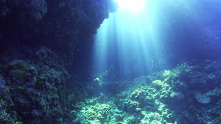 podwodny swiat : Sunlight Illuminates a Underwater Cave, Red Sea Wideo