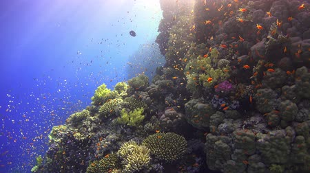 sualtı : Tropical Fish on Vibrant Coral Reef, underwater scene