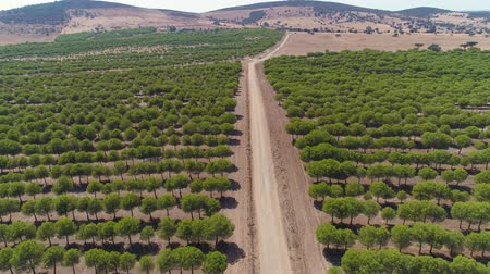 Aerial View Dirt Road in Rural Landscape Alentejo, Portugal
