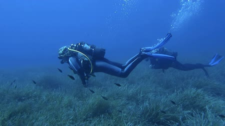 potápěč : HALKIDIKI,GREECE- JULY 19 2014:Female scuba divers swim slowly over a bed of sea grass during a dive