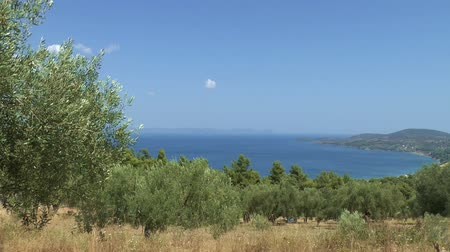 Средиземное море : View of the sea looking from an Olive Grove