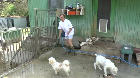 dog pound : Volunteer at a dog sanctuary cleaning the dog pens