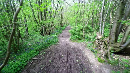 trilha : Aerial footage along a muddy footpath going through some woodland