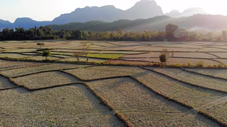 livestock sector : Aerial view of farm fields and rock formations in Vang Vieng, Laos. Vang Vieng is a popular destination for adventure tourism in limestone karst landscape.