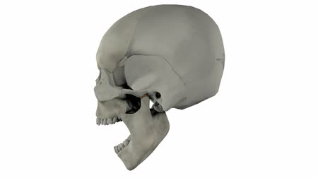 3D and Real Skull turntable footage for medical education and presentation. Looped. alpha Channel Included.