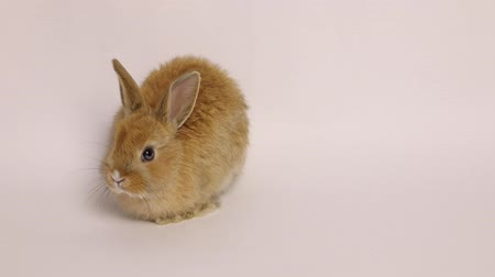 fulllength : Bunny rabbit sitting Stock Footage