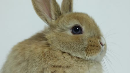 fofinho : Bunny rabbit sitting Stock Footage