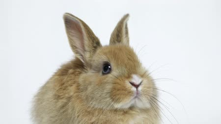 rabbit ears : Bunny rabbit sitting Stock Footage