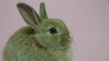 rabbits : Bunny rabbit sitting Stock Footage
