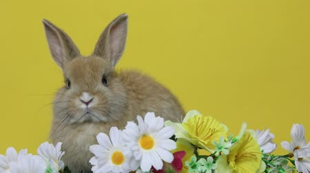 caça : Bunny rabbit on the flowers.