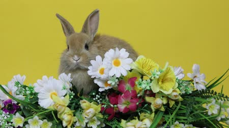 Bunny rabbit on the flowers.