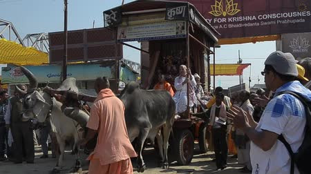 ALLAHABAD,INDIA-CIRCA,FEBRUARY 2013:an oxcart is prepared for the ritual of the Kumbh Mela.