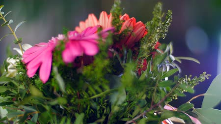 single headed : Flower gift in the rays of light Stock Footage