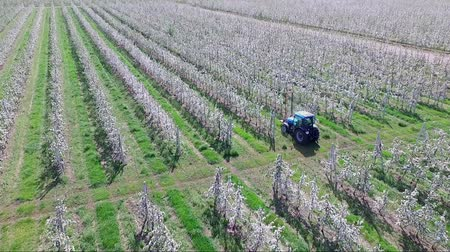 przeszczep : Farmer working on a tractor in his apple garden Wideo