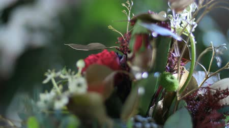 yana : close-up, Flower bouquet in the rays of light, rotation, consists of Protea, Brunia green, Barbatus, Rose pion-shaped bordeaux, pistachio tree, Ornithogalum, eucalyptus, Santini Stock Footage