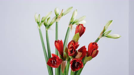yana : Flowers, bouquet, rotation on white background, floral composition consists of Amaryllis