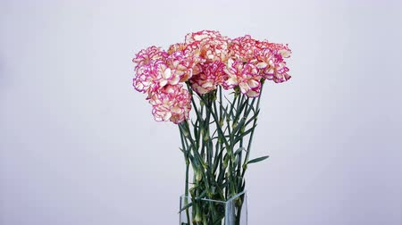 sarıcı : Flower bouquet, rotation on white background, floral composition consists of Carnation turkish Peach color