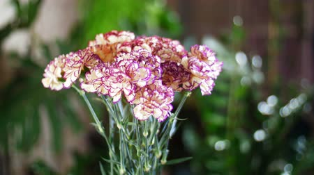grat : Flower bouquet in the rays of light in rotation, the floral composition consists of Carnation turkish Peach color