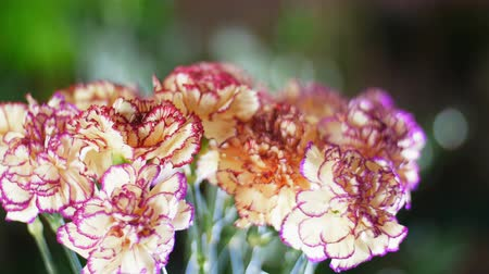 alstroemeria : close-up, Flower bouquet in the rays of light, rotation, the floral composition consists of Carnation turkish Peach color Stock Footage