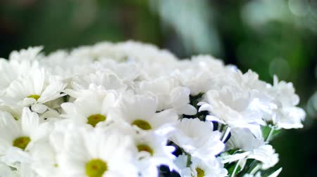 roomy : close-up, Flower bouquet in the rays of light, rotation, the floral composition consists of white Chrysanthemum Chamomile. In the background a lot of greenery