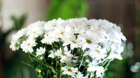 yana : close-up, Flower bouquet in the rays of light, rotation, the floral composition consists of white Chrysanthemum Chamomile. In the background a lot of greenery