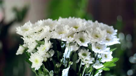single headed : close-up, Flower bouquet in the rays of light, rotation, the floral composition consists of white Chrysanthemum Chamomile. In the background a lot of greenery
