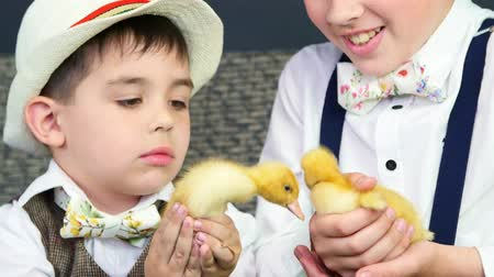 orphans : close-up. Two rustic, stylishly dressed boys play with ducklings, chickens, and a small dog. In the background a haystack, colored bird houses, balloons and flowers. Stock Footage