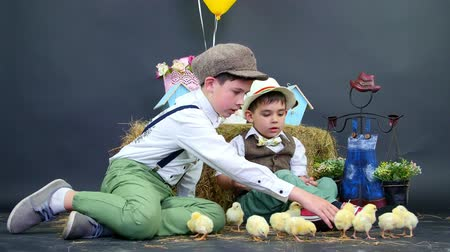 orphans : Village, stylishly dressed boys play with ducklings and chickens. Studio video with thematic decoration