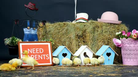 orphans : on the straw, on the hay are walking small chickens, ducklings. In the background a haystack, colored small birdhouses. plate with the inskription, we need parents