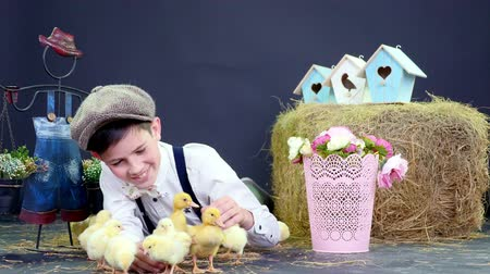 orphans : A rustic, stylishly dressed boy playing with ducklings and chickens, a haystack in the background, colored bird houses, and flowers.studio video shooting with a thematic decoration