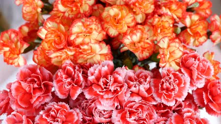 barbatus : close-up, view from above, Flower bouquet , rotation, the floral composition consists of Bright yellow, orange and pink turkish Carnation. Stock Footage