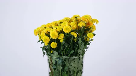 yana : Flowers, bouquet, rotation on white background, floral composition consists of yellow Chrysanthemum santini
