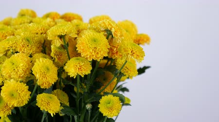 gypsophila : close-up, Flowers, bouquet, rotation on white background, floral composition consists of yellow Chrysanthemum santini Stock Footage
