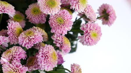 roomy : close-up, Flowers, bouquet, rotation on white background, floral composition consists of pink Santini