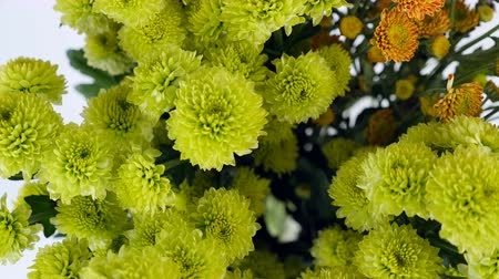barbatus : close-up, view from above, Flowers, bouquet, rotation on white background, floral composition consists of green and orange Santini