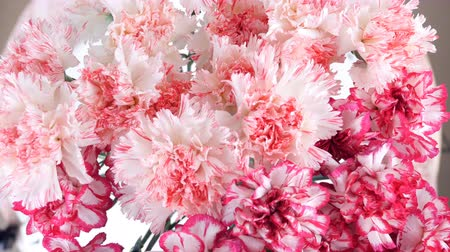 yana : close-up, view from above, Flowers, bouquet, rotation, floral composition consists of Gently light pink turkish Carnation