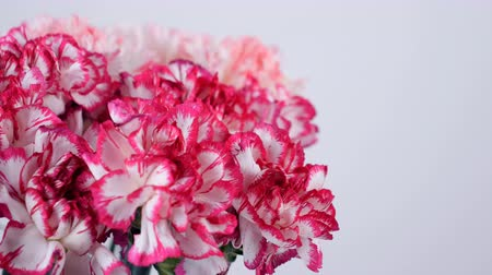yana : close-up, Flowers, bouquet, rotation, floral composition consists of Gently light pink turkish Carnation