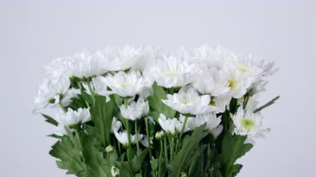 yana : close-up, lowers, bouquet, rotation, floral composition consists of white Chrysanthemum Chamomile