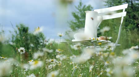 calcário : Among the chamomile lawn, against the blue sky is a white chair. On it a composition from a white jug, a white cup with tea, a batch and a bouquet of chamomiles. Stock Footage