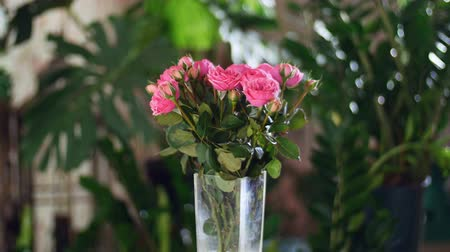 roomy : Flower bouquet in the rays of light, rotation, the floral composition consists of pink Roses pion-shaped. Divine beauty. in the background a lot of greenery.