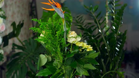 barbatus : Flower bouquet in the rays of light, rotation, the floral composition consists of Strelitzia, Rose of avalanche, solidago, Protea, Brunia green, Chrysanthemum, aspidistra