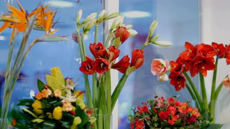alstroemeria : Flower shop, on the show-window there are a lot of bouquets of flowers from pion-shaped roses, Amaryllis ferrari, floral stylish compositions with different flowers.